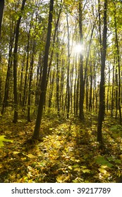 autumn forest / bright colors of leaves / sunlight / vertical