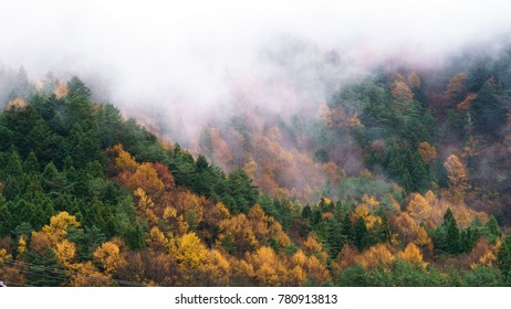 Autumn forest in cloudy day