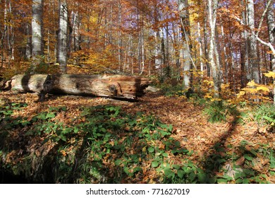 autumn forest, colorful forest, leafy tree, fallen tree