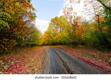 Autumn forest with colorful leaves