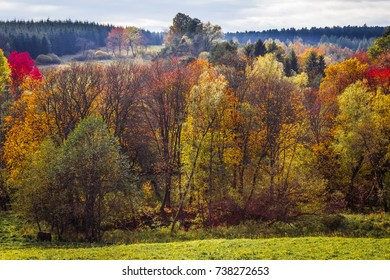 Autumn forest, colorful leaves on the trees