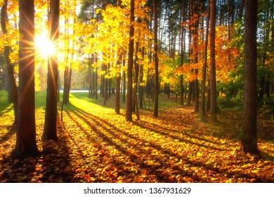 Autumn forest. Colorful trees illuminated by bright sun. Sunlight in yellow forest. Scenic park in sunshine. Fall nature landscape