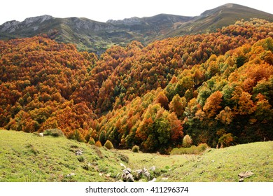 Autumn forest cover