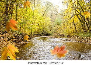 Autumn forest with a creek and falling leaves