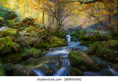 Autumn forest creek mossy rocks. Forest creek in autumn season. Autumn forest creek view. Forest creek in autumn