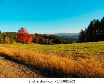 Autumn forest,  Czech Republic Beskydy, colorful autumn forest and meadow.