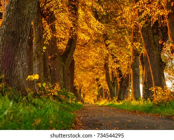 autumn forest in different colors