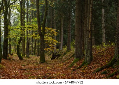 If in the autumn the forest is discolored. Many colorful colors. Nature in the Harz national Park, Germany