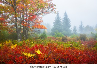 Autumn Forest, Dolly Sods, West Virginia