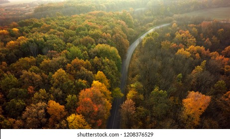 Autumn forest drone aerial shot, Overhead view of foliage trees and road.