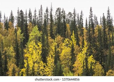 Autumn forest, Dundret nature reserve, Gellivare, Lapland, Sweden