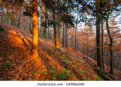 Autumn forest in the Eifel landscape, Germany