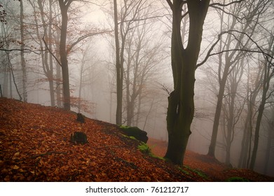 Autumn forest in the fog