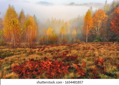 autumn forest. fog in a fairy forest