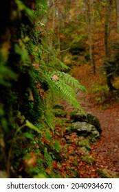 autumn forest foggy valey outdoor