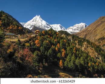 Autumn forest at the foot of the eight-thousand-meter mountain Manaslu in Nepal