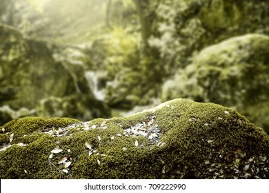 autumn forest with free space for your product on rock with moss