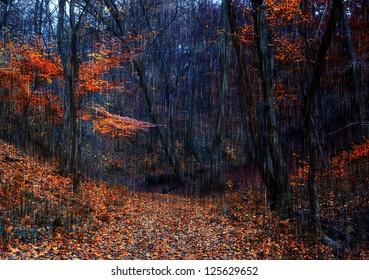 Autumn forest and heavy rain