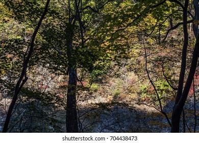 autumn forest, Japan