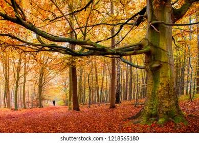 Autumn forest in Jutland, Denmark