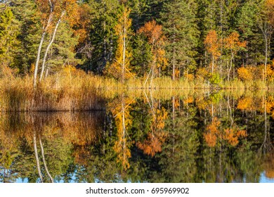 Autumn at the forest lake