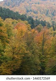 Autumn forest lake water landscape, yedigoller duzce turkey
