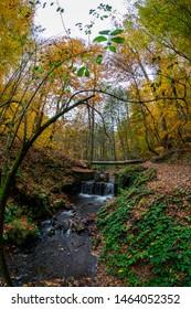Autumn forest lake water landscape, yedigoller bolu turkey