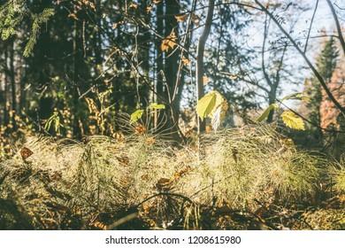 autumn forest landscape, blur