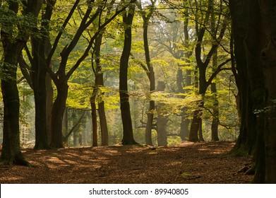 autumn forest landscape with a bright sun shine