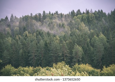 autumn forest landscape with colored trees and misty weather in countryside - vintage retro look