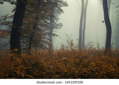 autumn forest landscape with colorful leaves on rainy weather