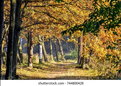 Autumn forest landscape. Colorful leaves and a sunny morning in the forest.
