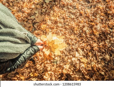 autumn forest landscape, a girl holding a bouquet of leaves in her hands