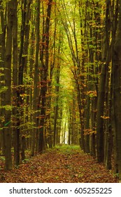 Autumn forest landscape. Glade in the autumn forest.