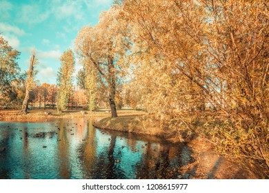 autumn forest landscape, lake with ducks, yellow leaves