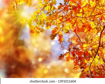 autumn forest landscape on a sunny day with oak leaves background