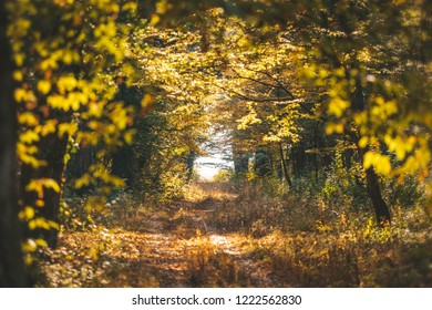 Autumn forest landscape with path going trough the middle of the golden forest