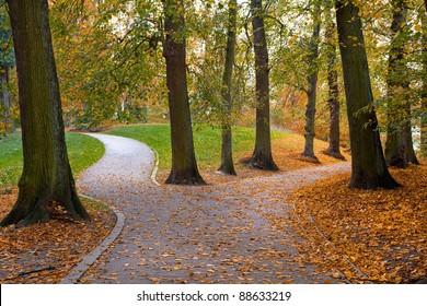 Autumn Forest. Autumn Landscape. Forest Road.