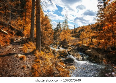 Autumn forest landscape with a small river