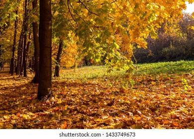 Autumn forest landscape with sun light illumining the fallen leaves