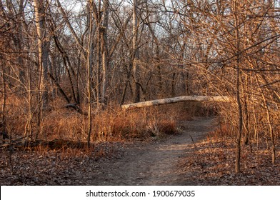 Autumn forest landscape view with a fallen tree across running path or biking trail during sunset time