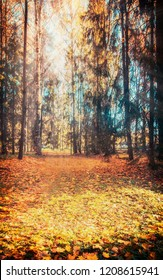 autumn forest landscape yellow leaves, various plants, forest path