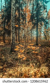 autumn forest landscape yellow leaves lie on the ground, various plants, sun rays