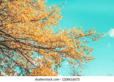 autumn forest landscape yellow leaves with blue sky