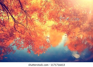 autumn forest landscape / yellow forest, trees and leaves October landscape in the park