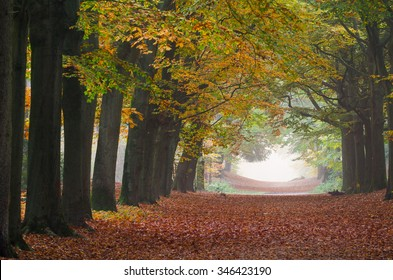 Autumn forest lane in Bergen op Zoom