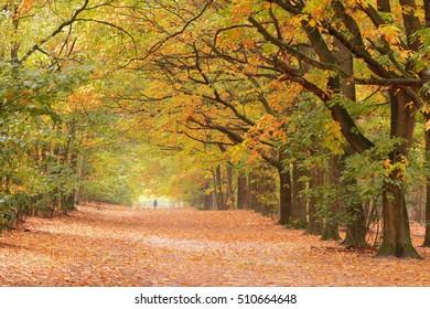 Autumn forest lane landscape with a bright sun