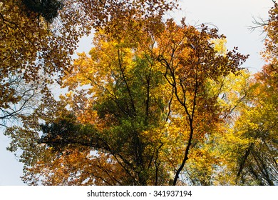 Autumn Forest with Leafs Changing Color