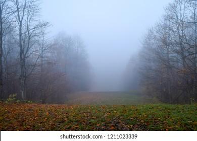 Autumn forest mist fog landscape. Forest fog in autumn forest mist scene. Autumn forest fog mist