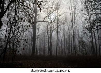 Autumn forest mist trees silhouette landscape. Mysterious forest mist trees in autumn fog. Halloween scary forest mist in autumn fog. Autumn forest mist fog trees silhouettes